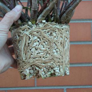 Агроперліт для розмноження рослин  5 л.