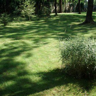 Газонная трава для солнечных площадок от фирмы DLF TRIFOLIUM SUN (Дания) 1кг