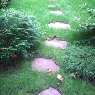 Газонні трави, засоби боротьби з бур'янами і шкідниками