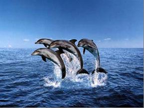 Немного о дельфинах, чувствах и цветах.