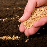 Семена лесных и садовых культур