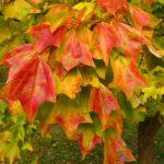 Саженцы лиственных растений для доращивания.