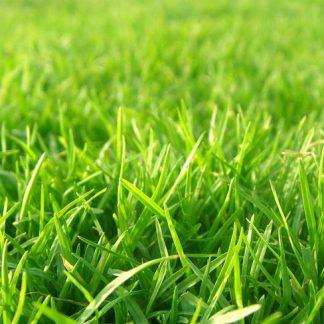 Газонная трава DELFI Спортивная 1 кг