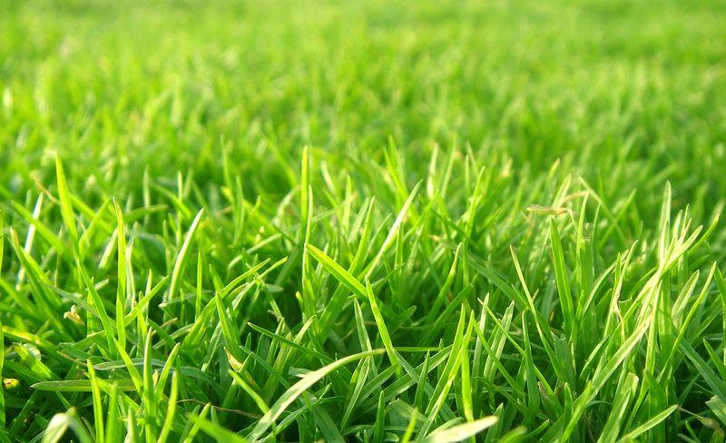 Семена газонных трав лучших производителей от 1 кг.