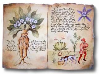 Библийские растения