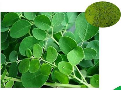 Моринга масличная Moringa oleifera