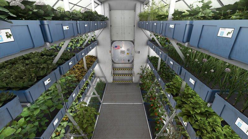 Растения в космосе. Взгляд в будущее.