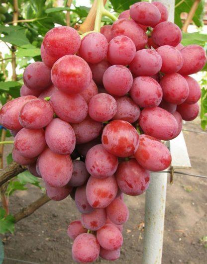 """Набор плодовых растений """"Перекрёсток вкусов"""""""