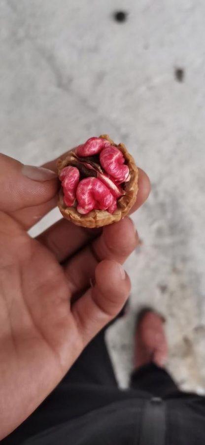 Новинка 2022г. Грецкий орех с красным ядром Red nuts цена за 1 саженец