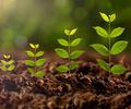 стимулятори росту – 120х